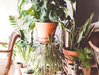 Het plantenasiel