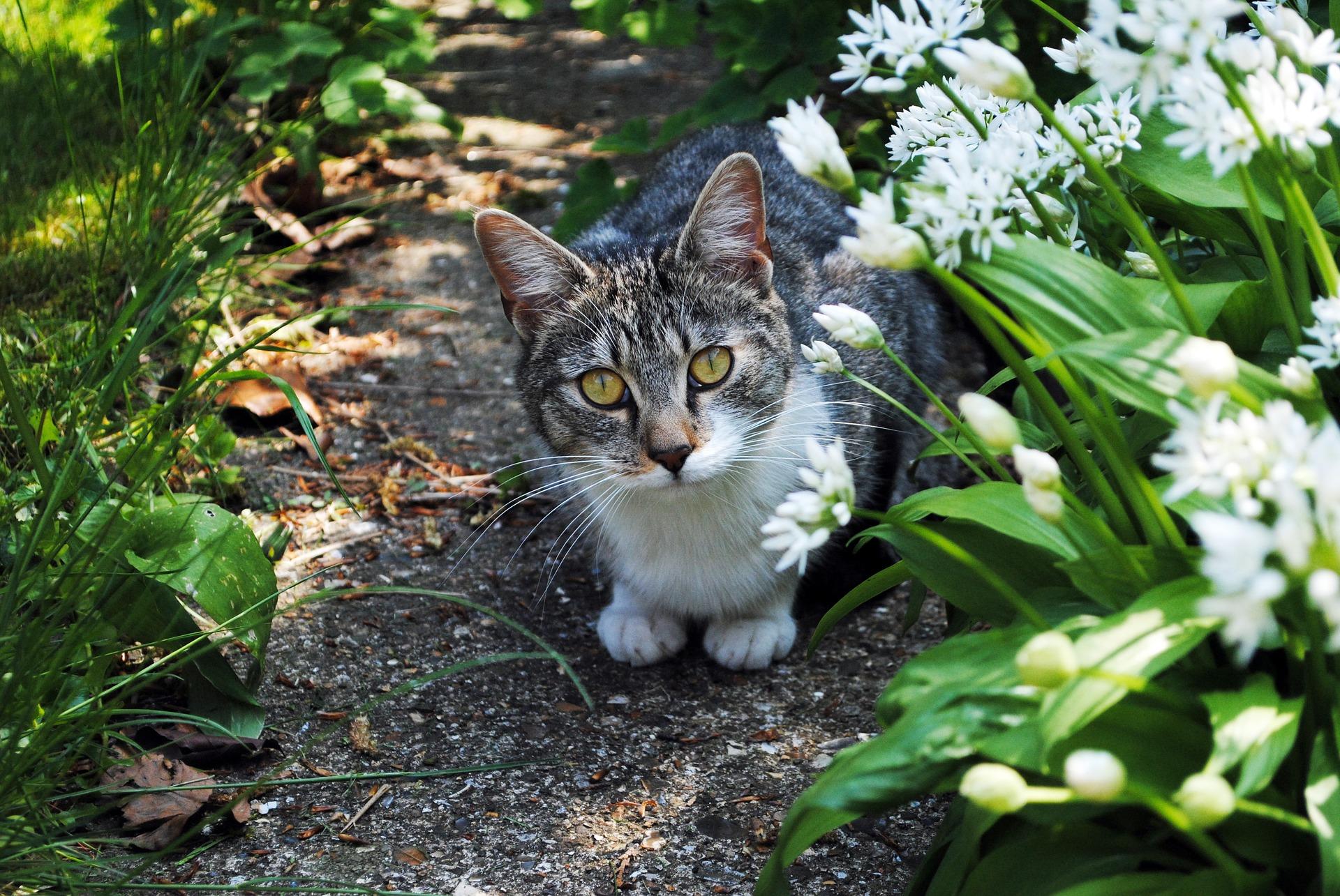 Wat te doen bij katten in de tuin potplanten buiten schaduw for Kattenpoep in de tuin