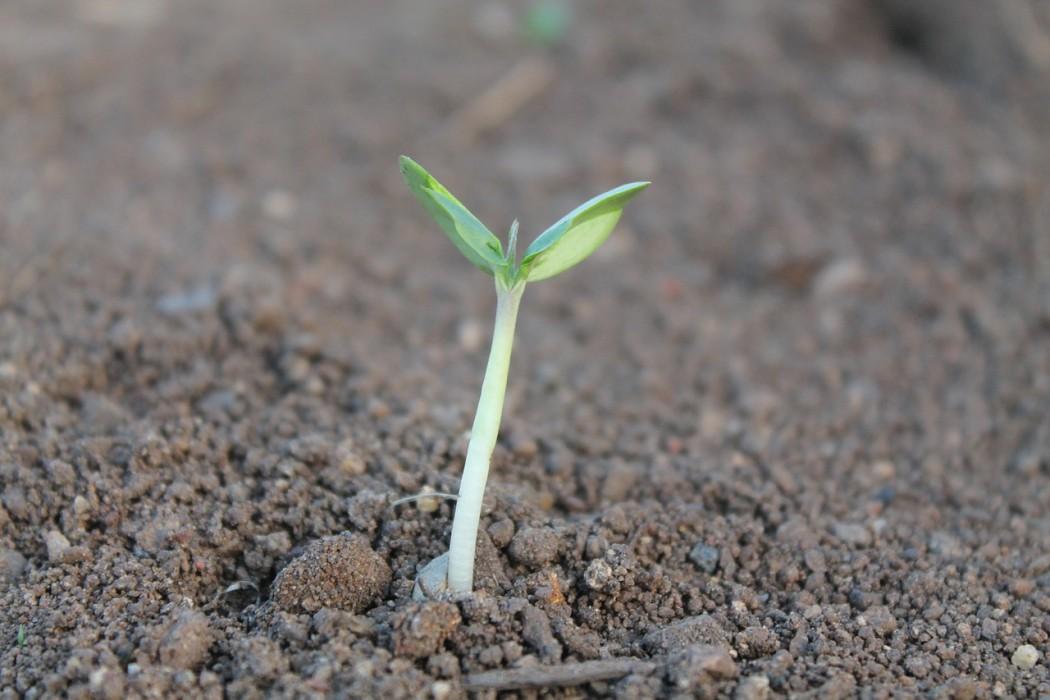 De Monsanto Methode