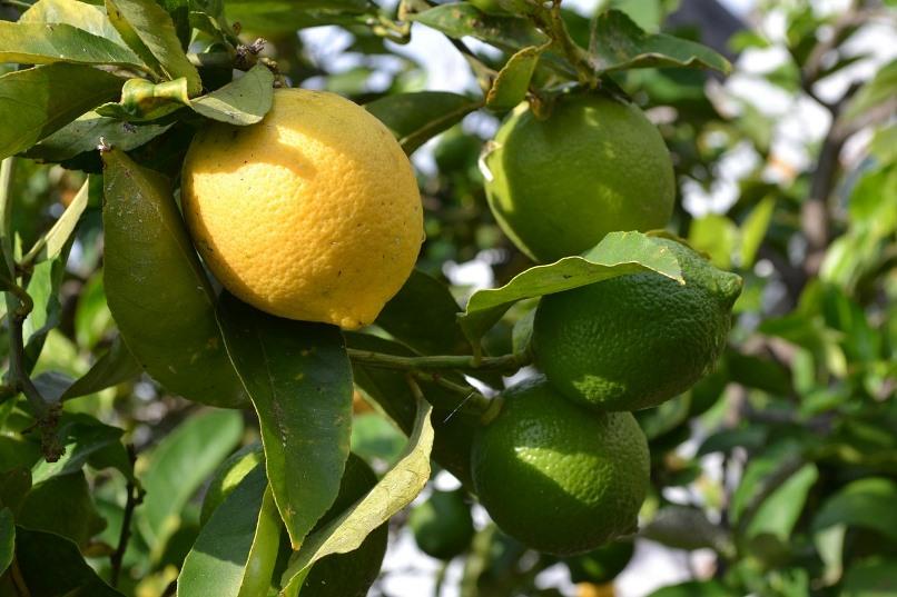 Duurzaam huishouden met citroen
