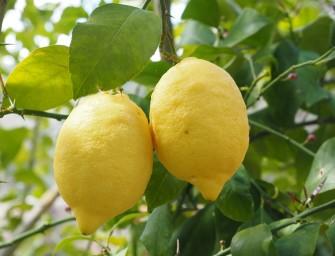 Duurzaam huishouden: citroen