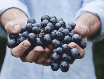 Kijktip: The Organic Effect