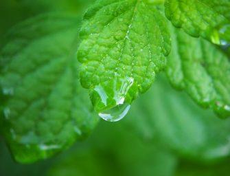 Duurzaam wonen: regenwater