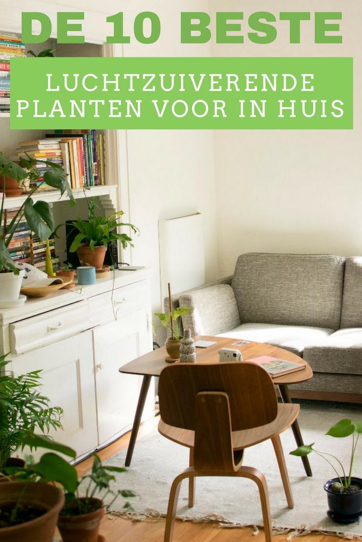 De 10 beste luchtzuiverende planten voor in huis