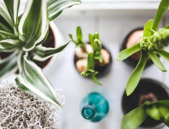 De 10 beste luchtzuiverende kamerplanten