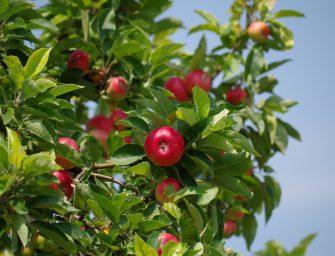 Landelijke Appelplukdag 2016