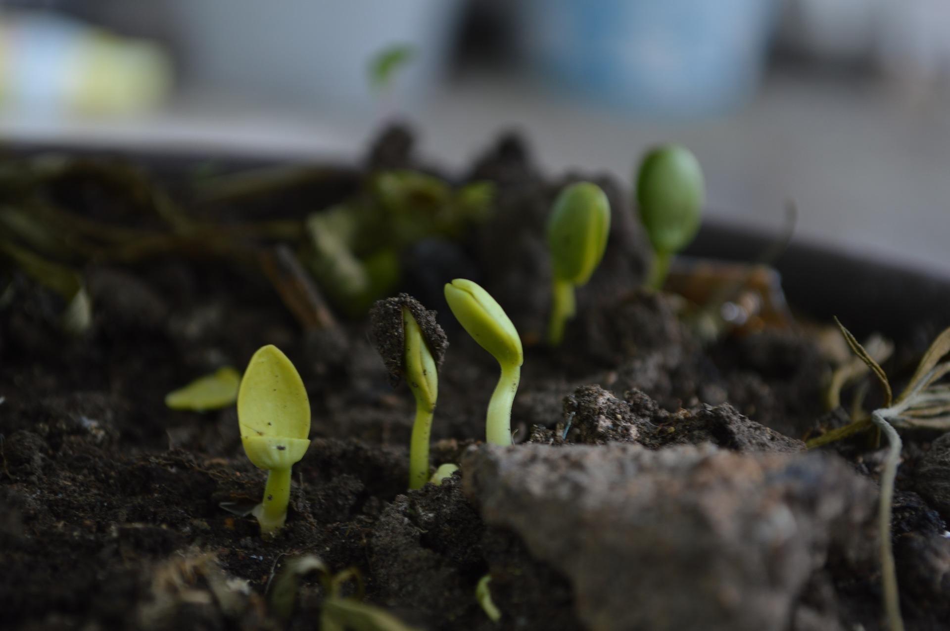 koffiedik compost