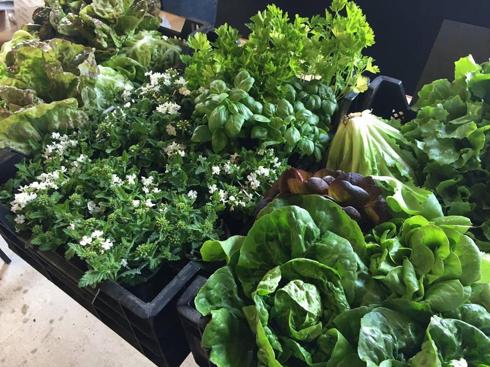 Slow Food Markt Heemstede