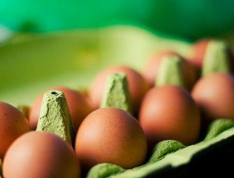 Duurzaam knutselen met eierdozen