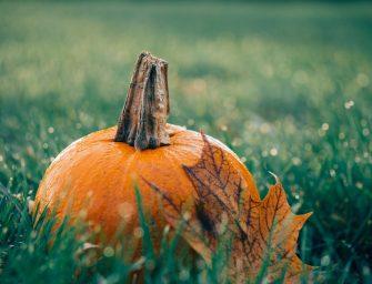 5 tips voor het herfstklaar maken van de (moes)tuin