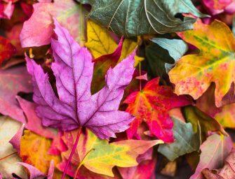 10x wat te doen met herfstbladeren
