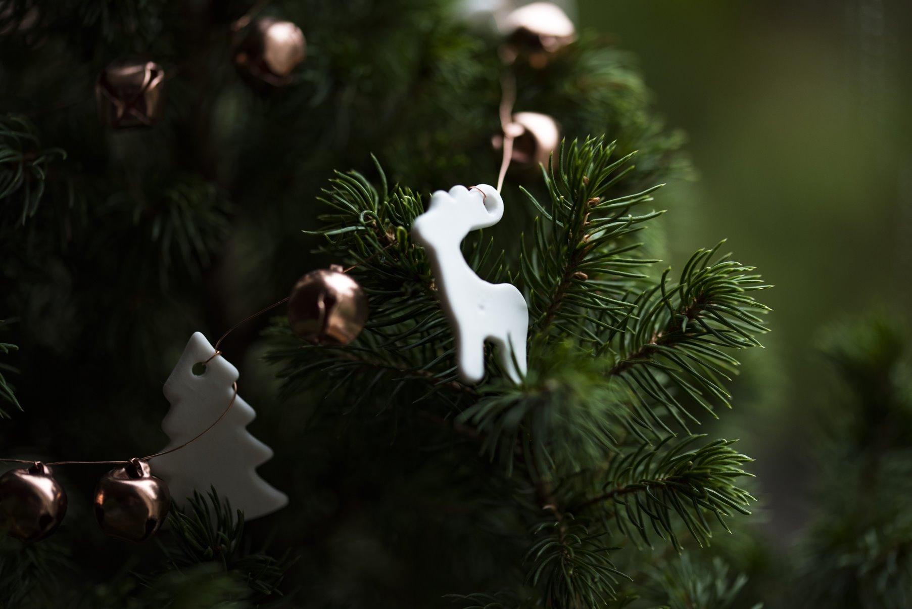 Hoe Kies Je Een Duurzame Kerstboom Awkward Duckling