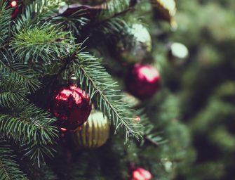 Hoe kies je een duurzame kerstboom?