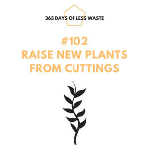 #102 raise new plants from cuttings