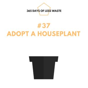 #37 adopt a houseplant