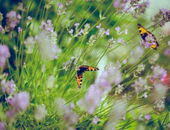5 tips om de tuin te verduurzamen