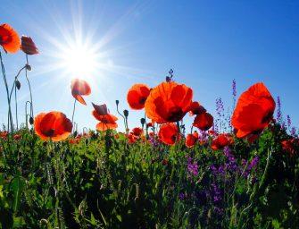 5x creatief met natuurlijke materialen: bloemen