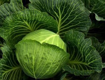 Duurzamer eten? Dit is er nu in het seizoen
