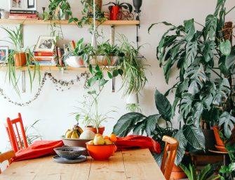 5 voordelen van een groene oase in huis