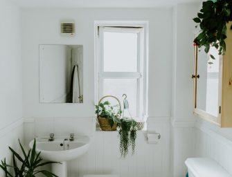 5 ideale kamerplanten voor in de badkamer