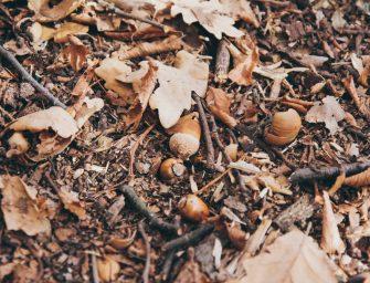 5x creatief met natuurlijke materialen: eikels