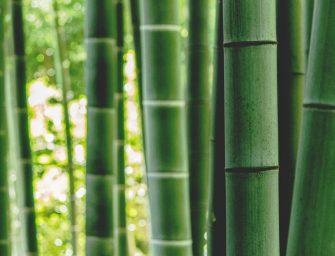 Zo duurzaam is kleding van bamboe