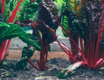 Handige tips om de tuin winterklaar te maken